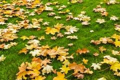 Gelbe und orange gefallene Ahornblätter auf einem hellgrünen Rasen Au stockfotos