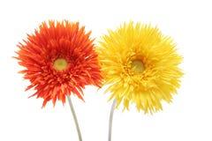 Gelbe und orange Gänseblümchen Lizenzfreie Stockfotos