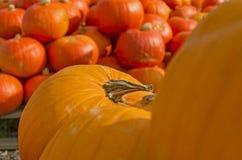 Gelbe und orange Kürbise Lizenzfreies Stockfoto