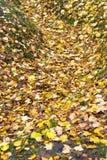 Gelbe und Orangenblätter in einem Ravin Stockfotos