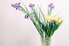 Gelbe und purpurrote Blumen in einem Vase auf einem beige Hintergrund Lizenzfreie Stockfotos