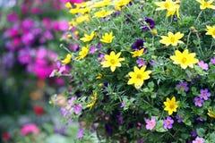 Gelbe und purpurrote Blumen im Freien Stockfotos