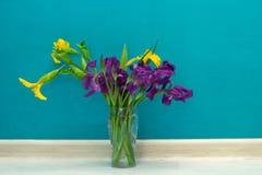 Gelbe und purpurrote Iris Lizenzfreie Stockfotografie