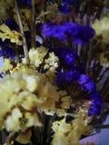 Gelbe und purpurrote Trockenblume lizenzfreie stockfotografie