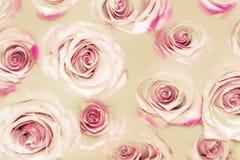 Gelbe und rosa Farbe Abstrat blüht Beschaffenheit Stockbilder