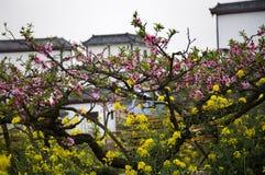 Gelbe und rosafarbene Blüten Lizenzfreie Stockbilder