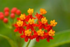 Gelbe und rote Blume Stockbild