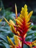 Gelbe und rote Blume Lizenzfreies Stockfoto