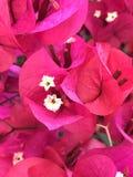 Gelbe und rote Blumen lizenzfreie stockfotos