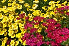 Gelbe und rote Wiesenblumen Stockbild