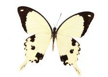 Gelbe und schwarze Basisrecheneinheit Stockfoto