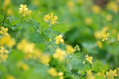 Gelbe Unkräuter in Gasse 6 stockfoto