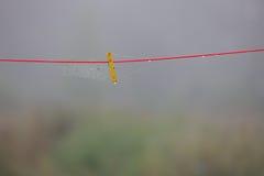 Gelbe Wäscheklammer und Spinnennetze auf dem roten Seil Lizenzfreie Stockfotografie