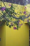 Gelbe Wand mit Baum und Blumen stockfotografie