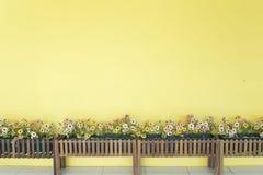 Gelbe Wand mit Blume Lizenzfreies Stockfoto