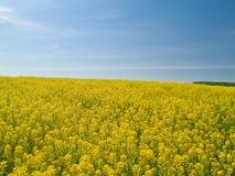 Gelbe Wiese Stockbild