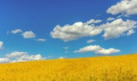 Gelbe Wiese und blauer Himmel Stockbilder