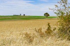 Gelbe Wiese und grüner Hügel, gegen blauen Himmel, Romantische Strasse, Deutschland lizenzfreies stockfoto