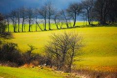 Gelbe Wiesen Stockbild