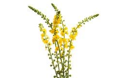 gelbe Wiesenblumen lokalisiert stockbild