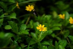Gelbe wilde Blume Stockfoto