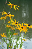 Gelbe wilde Blume Lizenzfreie Stockbilder