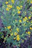 Gelbe wilde Blumen Stockbild