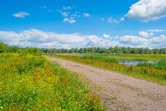 Gelbe wilde Blumen auf einem Gebiet im Sommer Lizenzfreie Stockbilder
