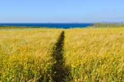 Gelbe wilde Blumen-Wiese geschnitten zur Hälfte durch Weg Lizenzfreies Stockbild