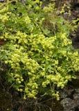 Gelbe Wildflowers lizenzfreies stockfoto
