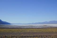 Gelbe Wildflowers in Death Valley Lizenzfreie Stockbilder
