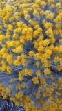 Gelbe Wildflowers mit graulichen Stämmen lizenzfreies stockbild