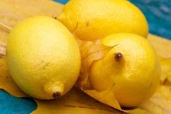 Gelbe Zitronen- Nochlebensdauer Lizenzfreies Stockfoto