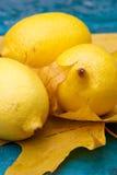 Gelbe Zitronen- Nochlebensdauer Stockbild