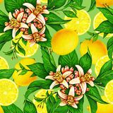 Gelbe Zitronenfrüchte auf einer Niederlassung mit den Grünblättern und -blumen lokalisiert auf grünem Hintergrund Aquarell, das n Lizenzfreies Stockfoto