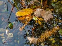 Gelber Autumn Leaves und Steine im Wasser stockbild