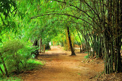 Gelber Bambus im Park Lizenzfreies Stockfoto