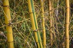 Gelber Bambuseffekt lizenzfreies stockbild