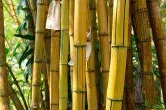 Gelber Bambuswald Stockbild