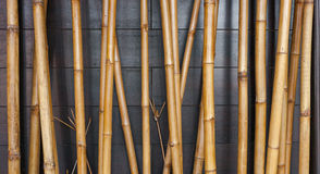 Gelber Bambuszaunhintergrund auf dem schwarzen Holz Lizenzfreie Stockfotos