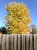 Gelber Baum Lizenzfreies Stockbild