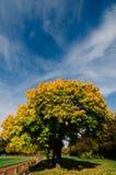 Gelber Baum des Herbstes nahe bei einer Laufbahn lizenzfreies stockbild