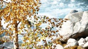Gelber Baum durch den Fluss stock video