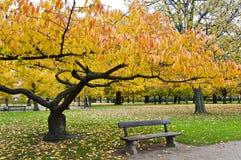 Gelber Baum und eine Bank Stockbild