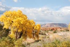 Gelber Baum und entfernter Berg Stockfotografie