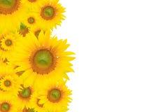 Gelber Blumen-Hintergrund, Sommer oder Frühlings-Thema Stockbilder