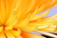 Gelber Blumenabschluß oben Lizenzfreies Stockbild