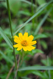Gelber Blumenabschluß oben stockbild