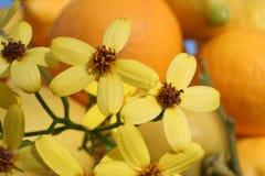 Gelber Blumenaufbau stockbild