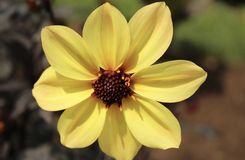Gelber Blumenblattblumenabschluß oben stockfoto
